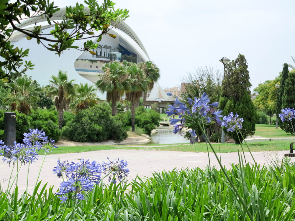 Blue bells in the city of arts and Sciences